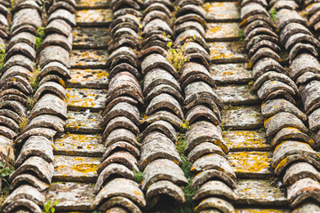 Old Italian Rooftop with Moss and Lichens