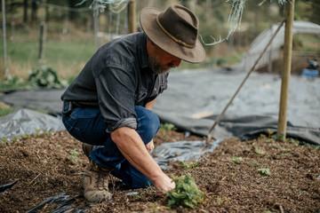 Organic farmer weeding his fields