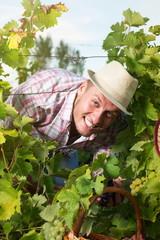 Happy farmer among the grape rows