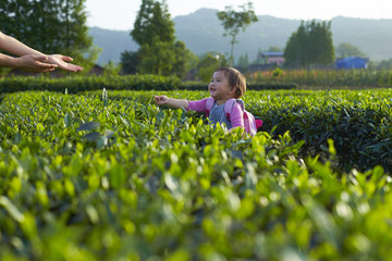 little asian girl in the tea plantation