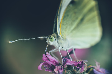 detail of a butterfly