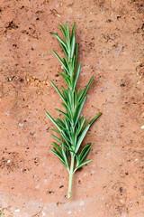 Green rosemary herb on clay brick