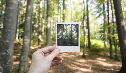 Hand holding old photo of forest in the woods