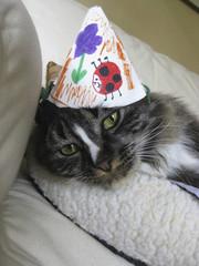 Adorable kitten wearing birthday hat