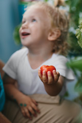 Laughing little blond boy holding a ripe tomato