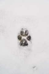 Dog traces on snow