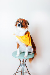 Cute dog sitting on a stool