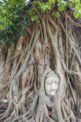 Stone head of the sandstone Buddha covered by roots of Bodhi tree at Wat Mahathat, Ayutthaya, Thailand