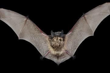 Small bat 9