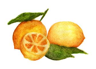 Hand drawn watercolor painting of fresh citrus fruit lemon with green leaves on white background. illustration of fruit lemon with splashes