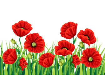 Red Poppy Flower isolated on white background. Vector red romantic poppy flowers and grass. red poppies. red flower. flourish flowery bunches design for decor Web site page and mobile app design.