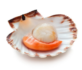 In de dag Schaaldieren Raw scallop isolated on white background