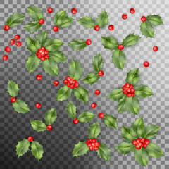 Set of Holly berry leaves Christmas decoration. EPS 10 vector