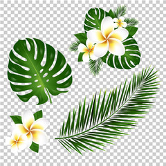 Palm And Monstera Tree Leaf