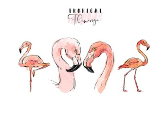 Hand drawn vector graphic exotic paradise pink birds flamingo illustration collection set isolated on white background