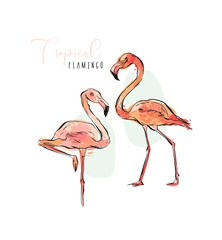 Hand drawn vector abstract artistic illustrations collection set of tropical exotic paradise bird pink flamingos in pastel colors isolated on white background