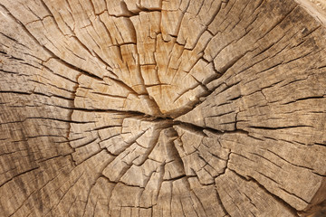 Pine Tree Wood Grain with Cracks
