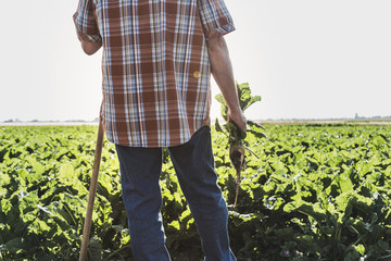 Back view of senior farmer with turnip standing in front of a field, partial view