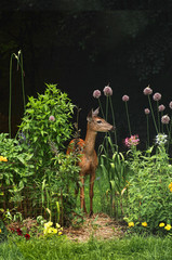 white-tailed doe in garden