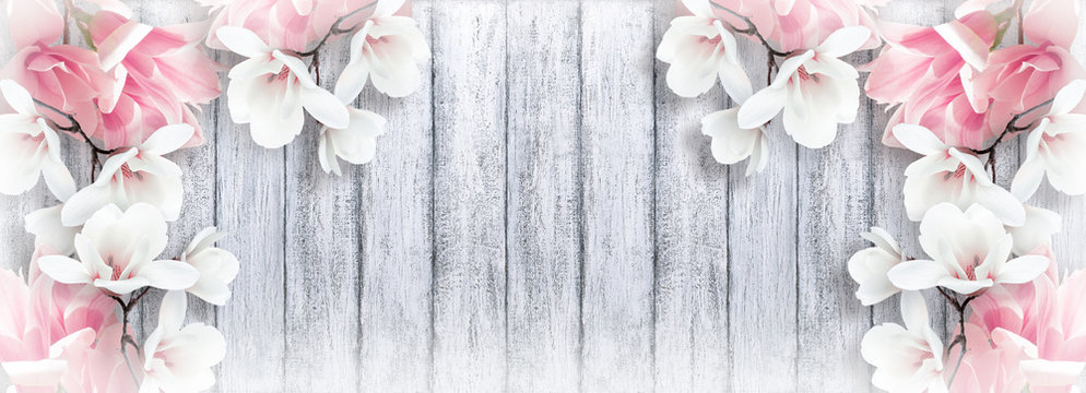 Magnolia flowers on shabby background