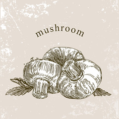 Healthy food. Mushrooms. Engraving. Vintage style. Vector illustration