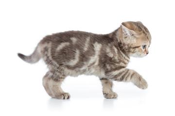 Papier Peint - Afraid kitten cat side view