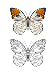 Set of colored and outline butterfly.   Stock line vector illustration.