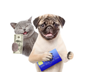 Happy Cat with dollar USA and funny puppy hold credit card. isolated on white background