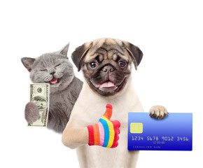 Happy Cat with dollars USA and Funny puppy hold credit card and showing thumbs up. isolated on white background