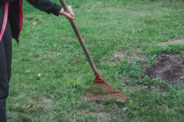 girl with a rake cleans the freshly cut grass from the lawn
