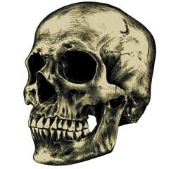 Yellow human skull