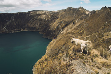 Dog Overlooking Crater Lake