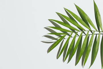 Palm leaves on a baby blue background