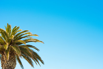 Palm tree on blue sky background. Copy space for text.