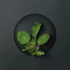 Creative layout made of green leaves in dark paper card. Flat lay. Nature concept