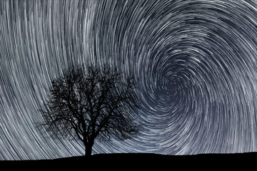 Star trails. Lonely tree.