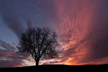 Lonely tree. Sunset with cloudy sky.