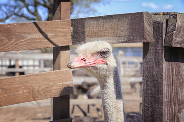 Closeup view of camel bird on sunny day