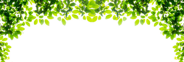 Green leaf and branches on white background
