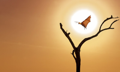 Bare tree with flying fox on orange sky