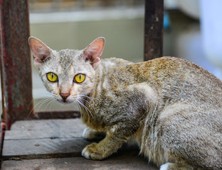 Cat on street in Yangon, Myanmar