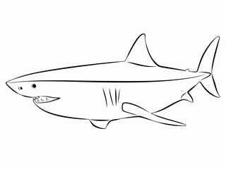 illustration of shark, vector draw