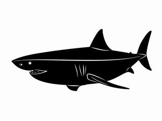 illustration of shark, vector draw
