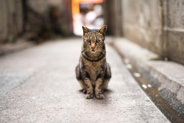 Cat Portrait at front view