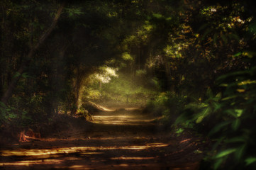Forest trail background, mystery and scary concept