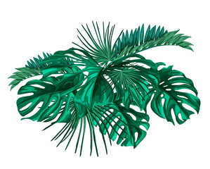 vector tropical leaves set isolated