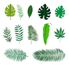 Set of flat tropical leaves isolated on white