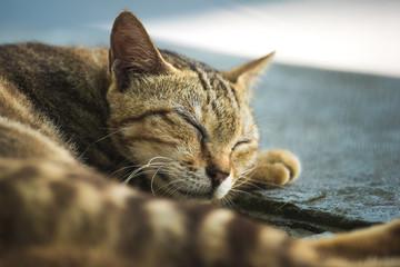 Cat sleeping, close up