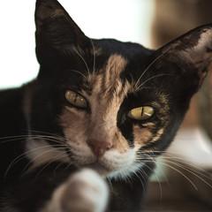 Cat Portrait in Tai O Hong Kong