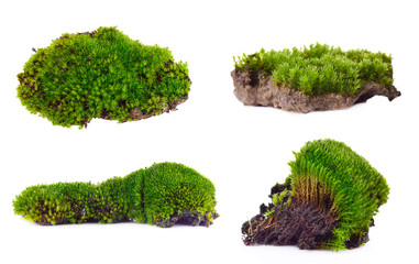 Green moss set isolated on white bakground